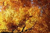 Cena com as árvores e as folhas coloridas do outono — Foto Stock