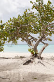 The beautiful landscape of the caribbean — Stock Photo