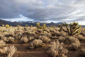 Southern Nevada Mojave Desert Morning — Stock Photo