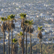 Hollywood Hillside Palms — Stock Photo #34749563