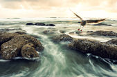 Surf and Bird — Stock Photo
