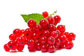 Red currants on a white background. — 图库照片