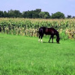 Stock Video: Horses graze in meadow