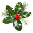 Holly leaves and berries isolated on a white background — Стоковая фотография