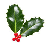 Holly leaves and berries isolated on a white background — Stock Photo