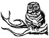 在一根树枝上的猫头鹰 — 图库矢量图片