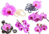 Orchids on a white background. Flower collection. — 图库照片