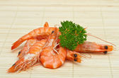 Shrimp with parsley close up — Stock Photo