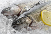 Fresh trout with lemon on ice — Stock Photo