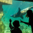Silhouettes of children in the aquarium — Stock fotografie