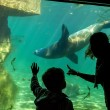 Stock Photo: Silhouettes of children in the aquarium