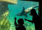 Silhouettes of children in the aquarium — Stock Photo
