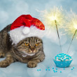 Christmas cat with a muffin and sparklers — Stock Photo