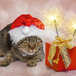 Stock Photo: Christmas cat with gift and sparklers
