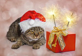 Christmas cat with a gift and sparklers — Stock Photo