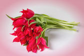 Bouquet of tulips on a pink background — Stok fotoğraf