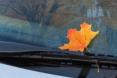 Feuille d'automne sur un pare-brise de voiture — Photo