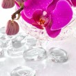 Stock Photo: Pink orchid with dew and reflection