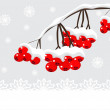 Winter background with red berries and snow — Stock Vector