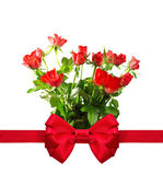 Bunch of roses with a red bow. Isolate on white background — Stok fotoğraf
