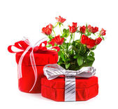 Red gift with a red bow and roses. Isolate on white background — Stockfoto