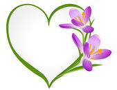 Purple crocus with a frame in the shape of heart. — Stockvector