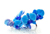 Blue orchid with reflection in water on white background — Stock Photo