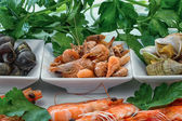 Sea shells with herbs.  — Stock Photo