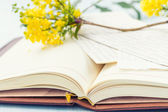 Notebook with blooming tree branch. — Foto de Stock