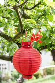 Red lantern on a tree branch. — Stock Photo