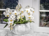 Background with white orchid — Stock Photo