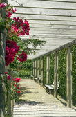 Gallery in a garden of roses. — Stock Photo