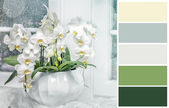 Background with white orchid   with complimentary swatches. — Stock Photo