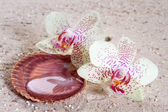 Orchid  in the sand  — Stock Photo