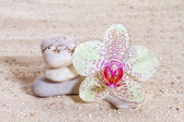 Orchid with zen stones in the sand  — Stock Photo