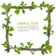 Twig and green leaf frame — Stock Photo