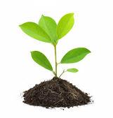 Młoda roślina zielony — Zdjęcie stockowe