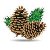 Pine cones — Stock Vector