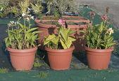 Kreş saksı bitkileri — Stok fotoğraf