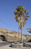 Plam tree on roadside — Stock Photo