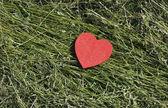 Heart shape on grass — Stock Photo