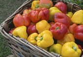 Peppers in basket — Stock Photo