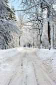 Road during the winter — Stock Photo