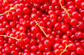 Red currant — Стоковое фото
