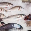 Fishes on market — Stock Photo #13973575