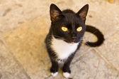Uteliggare katt på gatan — Stockfoto