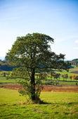 Lonely tree — Stock Photo