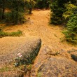 Stock Photo: Trail in dark forest