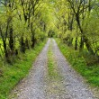 Stock Photo: Country road with willows