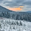 Sunset during winter in the forest — Stock Photo